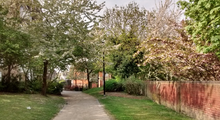 Pathway through trees with spring blossom